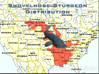 Shovelnose Distribution Map